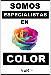 especialistas tintes de color peluqueria
